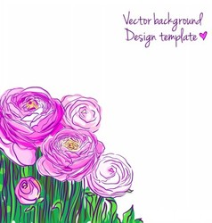 With blooming ranunculus vector
