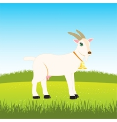 Nanny goat on field vector image vector image