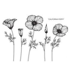 California poppy flower drawing vector