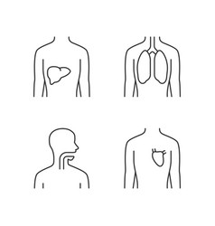 Healthy human organs linear icons set liver vector