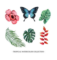 Set isolated watercolor foliage and floral vector