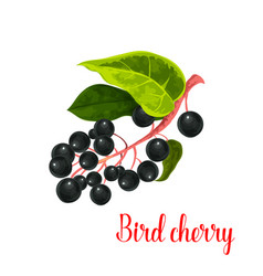 bird cherry berry icon vector image vector image