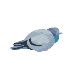 Fat pigeon flat overweight vector