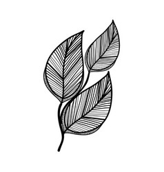 rustic branch leaves decoration vector image vector image