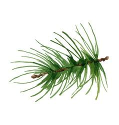Watercolor pine branch vector image vector image