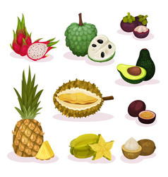 detailed flat set of different exotic vector image