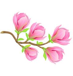 pink spring magnolia branch vector image