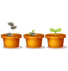 Three potted plants with seeds and green leaves vector