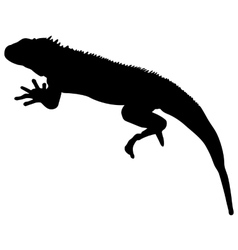 Lizard is goanna silhouette on a white background vector image