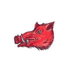 Wild Boar Razorback Head Side Drawing vector image vector image