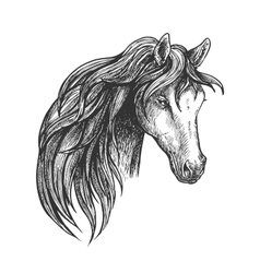 Horse of american quarter breed sketch portrait vector