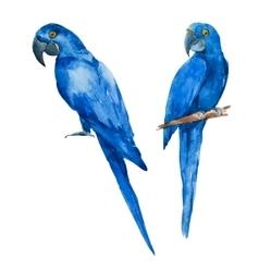 Nice watercolor blue parrots vector image