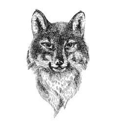 sketch of wolf vector image