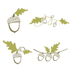 Acorn Design Collection vector