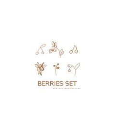 berries set flowers leaves berries vector image