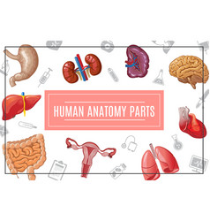 cartoon human body organs concept vector image