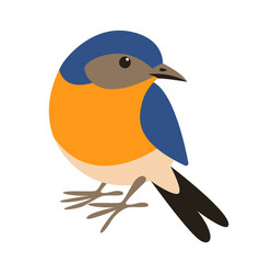 Eastern bluebirdflat style front vector