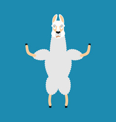 lama alpaca was confused emotions animal is vector image