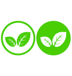 natural green mint leaves icon in frame vector image