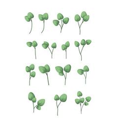 set of laurel leafs vector image