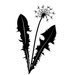 silhouette a dandelion with flying seeds black vector image