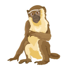 sitting monkey isolated vector image