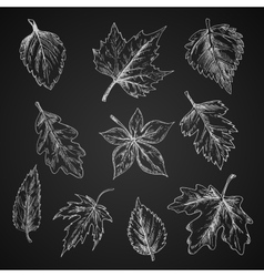 Chalk leaves sketch on blackboard vector