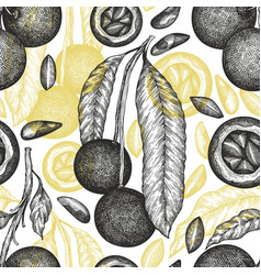 hand drawn brazilian nut branch and kernels vector image