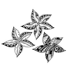 Plumeria flower as tribal style tattoo vector