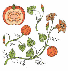 Pumpkin set with pumpkins and branches vector