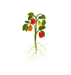 flat of icon of bush with fresh bell vector image