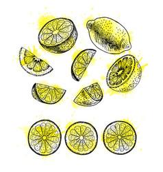 Watercolor hand drawn set of lemon sketch vector