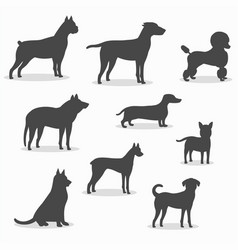 dogs icons set of different breeds vector image