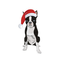boston terrier wearing santa hat isolated on vector image