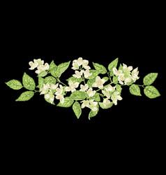 Headline decor jasmine element in vector