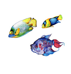 isolated fish tropical fish on a white background vector image