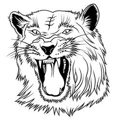 Big Cat Head vector image