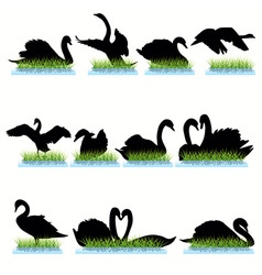 swans vector image