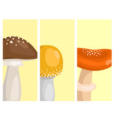 Amanita fly agaric toadstool cards mushrooms vector