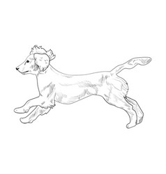 Cocker spaniel running hand drawn sketch isolated vector