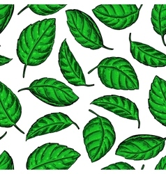 Mint drawing pattern Isolated vector image