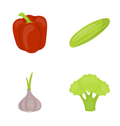 red sweet pepper green cucumber garlic cabbage vector image