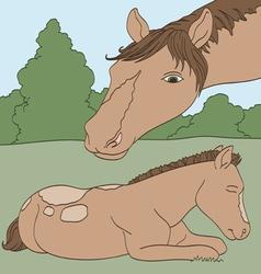 Sleeping Foal vector image