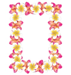 White and pink frangipani flowers frame vector image vector image