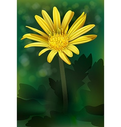 A blooming flower vector