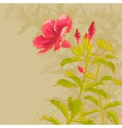 Allamanda flower on toned background vector image