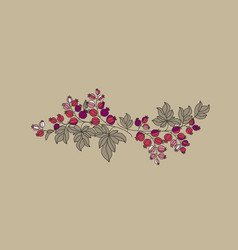 currant berries branch outline vector image