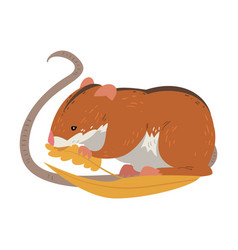 field mouse eating wheat grains cute fluffy red vector image