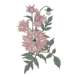 hand drawn summer vintage bouquet rustic dahlia vector image