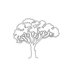 one continuous line drawing beauty marula tree vector image